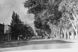 Main Street - cottonwoods